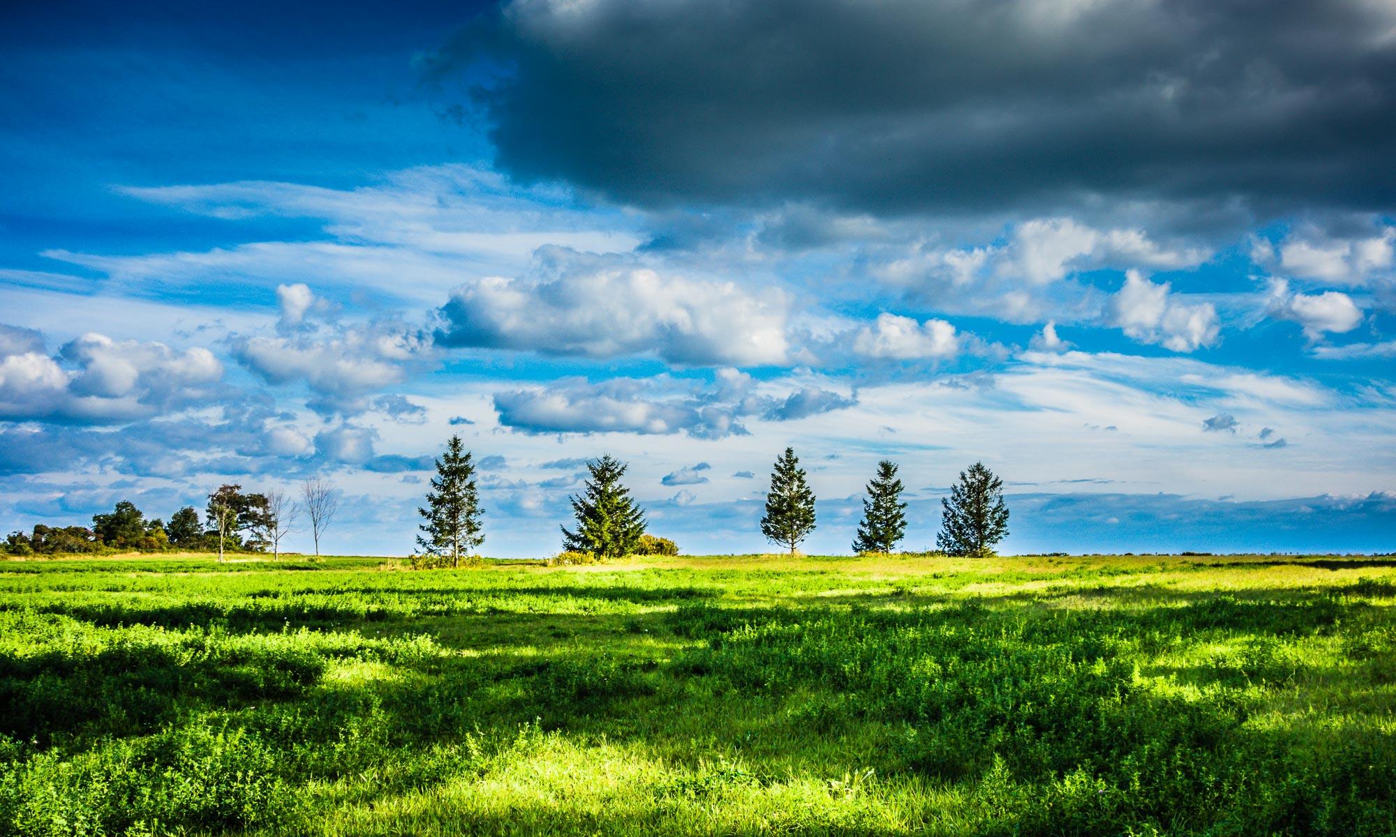 White Tree Farm